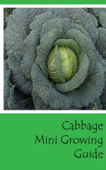 Cabbage Mini Growing Guide - Front cover