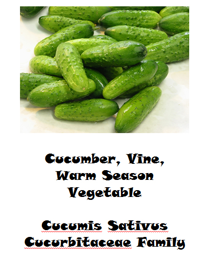 Cucumber mini growing guide - book interior 2
