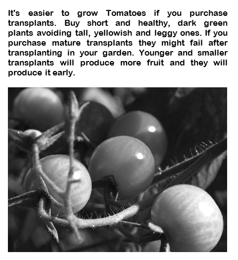Grow Vegetanles in your Garden - Book interior 5