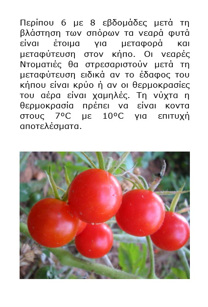 Grow vegetables in your garden - Greek version - Book interior 4