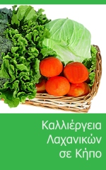 Grow vegetables in your garden - Greek version - Front cover