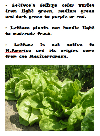 Lettuce mini growing guide - Book interior 2