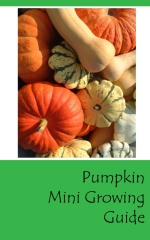 Pumpkin mini growing guide - Front cover