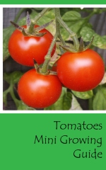 Tomatoes mini growing guide - front cover