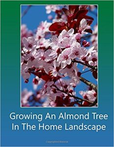 Growing an almond tree