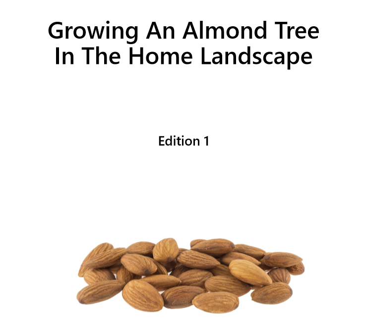 Growing an almond tree - Edition 1 - Book interior - 1